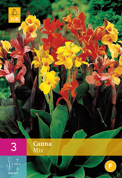 canna mixed for sale buy online for. Black Bedroom Furniture Sets. Home Design Ideas
