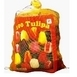 Tulips Triumph Mix (XL-Pack)