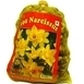 Daffodil Botanical (Big Bag)