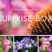 Summer Flower bulb Surprise pack 1