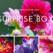 Summer Flower bulb Surprise pack 3