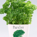 Grow Your Own Parsley