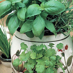 Kitchen Herbs with Pot and Soil