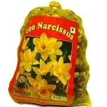 Daffodil Bulbs Botanical (Large)