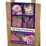 Flowers for 120 Days!