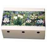 Flower Bulbs Collection White