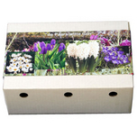 Flower Bulbs Collection Purple-White