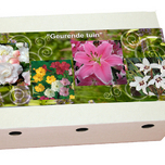 Fragrant Summer Garden Collection