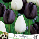 Tulips Black and White Mix