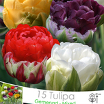 Tulips Ice Cream mix