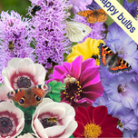 Happy Butterfly and Bee mixture