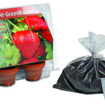 Mini Greenhouse Strawberry