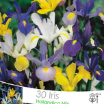 Iris Hollandica Mix Large Package
