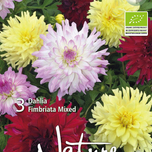 Organic bulbs: Dahlia Fimbriata Mix