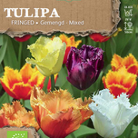 tulip crispa bio mixed
