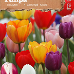 Tulip Triumph Mix (Big Bag)