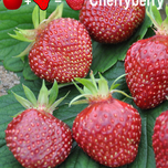 Strawberry Cherryberry