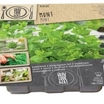 Grow Your Own Kit – Propagator Mint