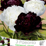 Peony Mixed: Black and White