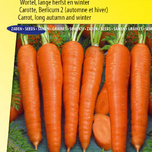 Winter Carrot Berlikum