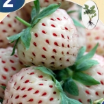 White Pineberry pakket