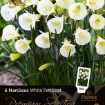 Narcissus Bulbocodium White Petticoat