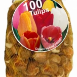 Tulips Darwin Mix (XL-Pack)