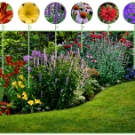 Long Flowering Border (9 plants)