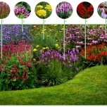 Happy Butterfly Garden Border (12 plants)