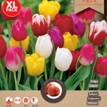 Tulips Triumph Mix