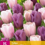 Tulip Pink & Purple Mix