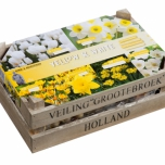 Wooden Case Yellow & White Mix