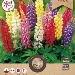 Lupines Mixed
