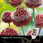 Allium Red Mohican – Ornamental Onion