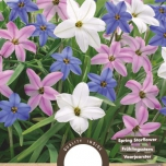 Ipheion Uniflorum Mix – Springstar