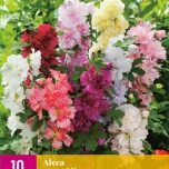 Alcea Rosea Mix - Hollyhock