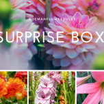 Summer Flower bulb Surprise pack 2