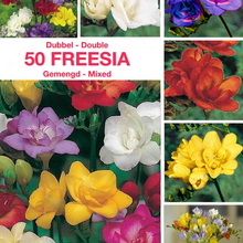 planting Freesia bulbs