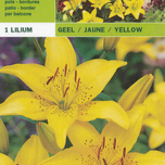 Lily Asiatic Yellow
