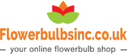 Flower bulbs for sale